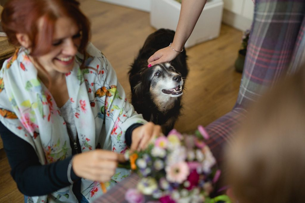 friendly dog getting fuss before wedding